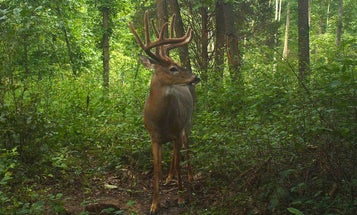 7 Steps for Taking Better Summer Trail Camera Photos