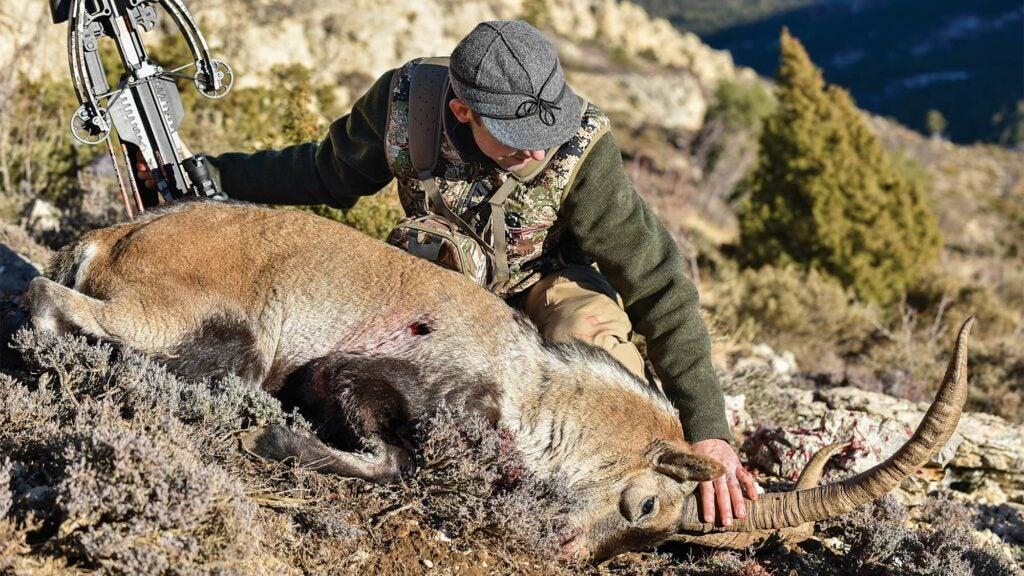 andrew mckean hunting spanish ibex