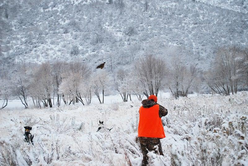 httpswww.outdoorlife.comsitesoutdoorlife.comfilesimport2014importImage2009photo610-jhn-pheasant.jpg