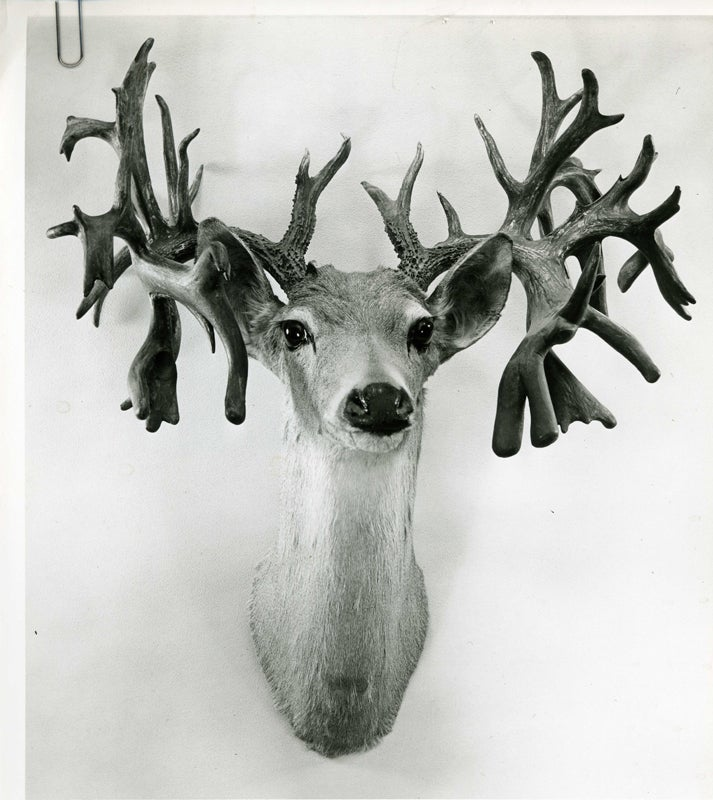 gnarly texas buck