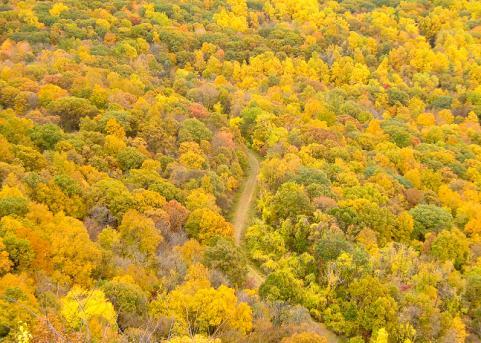 httpswww.outdoorlife.comsitesoutdoorlife.comfilesimport2014importImage2009photo7Decfoliage_20.jpg