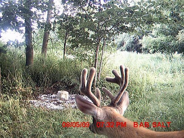 httpswww.outdoorlife.comsitesoutdoorlife.comfilesimport2014importImage2009photo73_Up_Close_10_pt_0.jpg