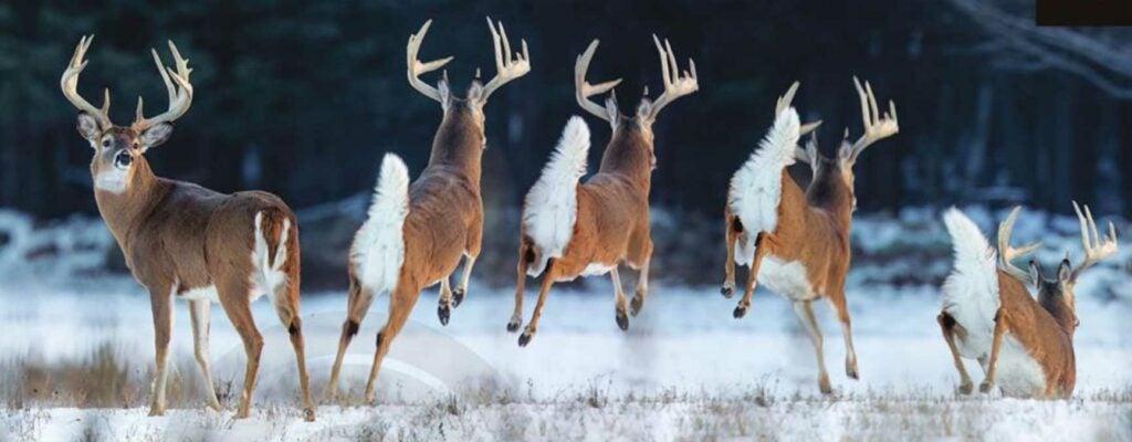 big buck running away