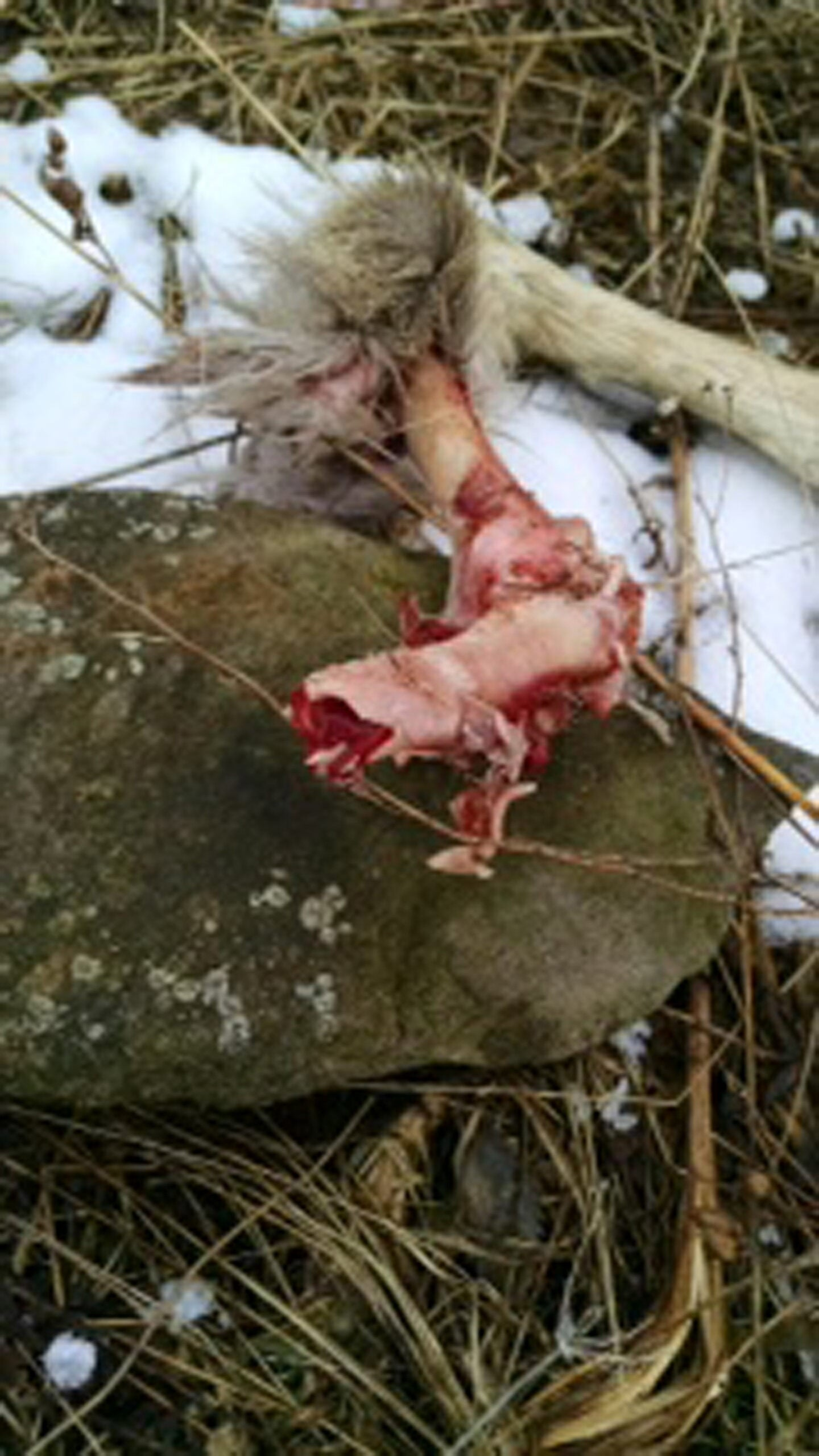 Whitetail Deer: How To Minimize Winter Kill