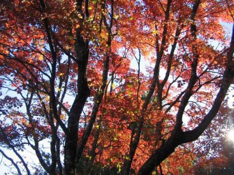 httpswww.outdoorlife.comsitesoutdoorlife.comfilesimport2014importImage2009photo7Decfoliage_39.jpeg