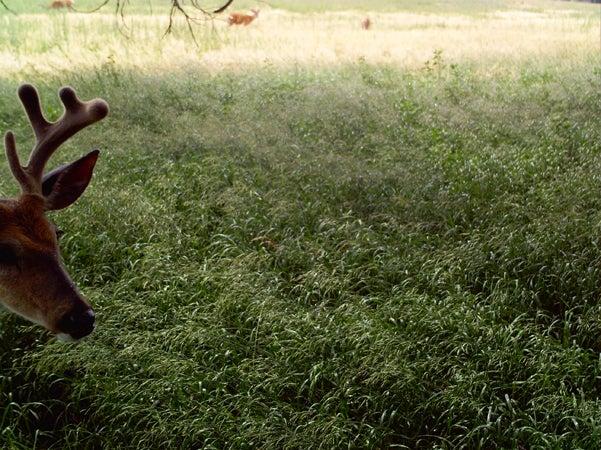 httpswww.outdoorlife.comsitesoutdoorlife.comfilesimport2013images201007RQ23_0.jpg
