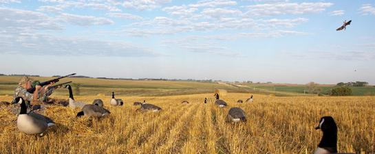 Goose Hunting: How to Set Up on Early-Season Honkers