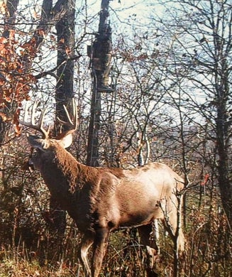 Hunt for Monster Illinois Buck Caught on Trail Camera
