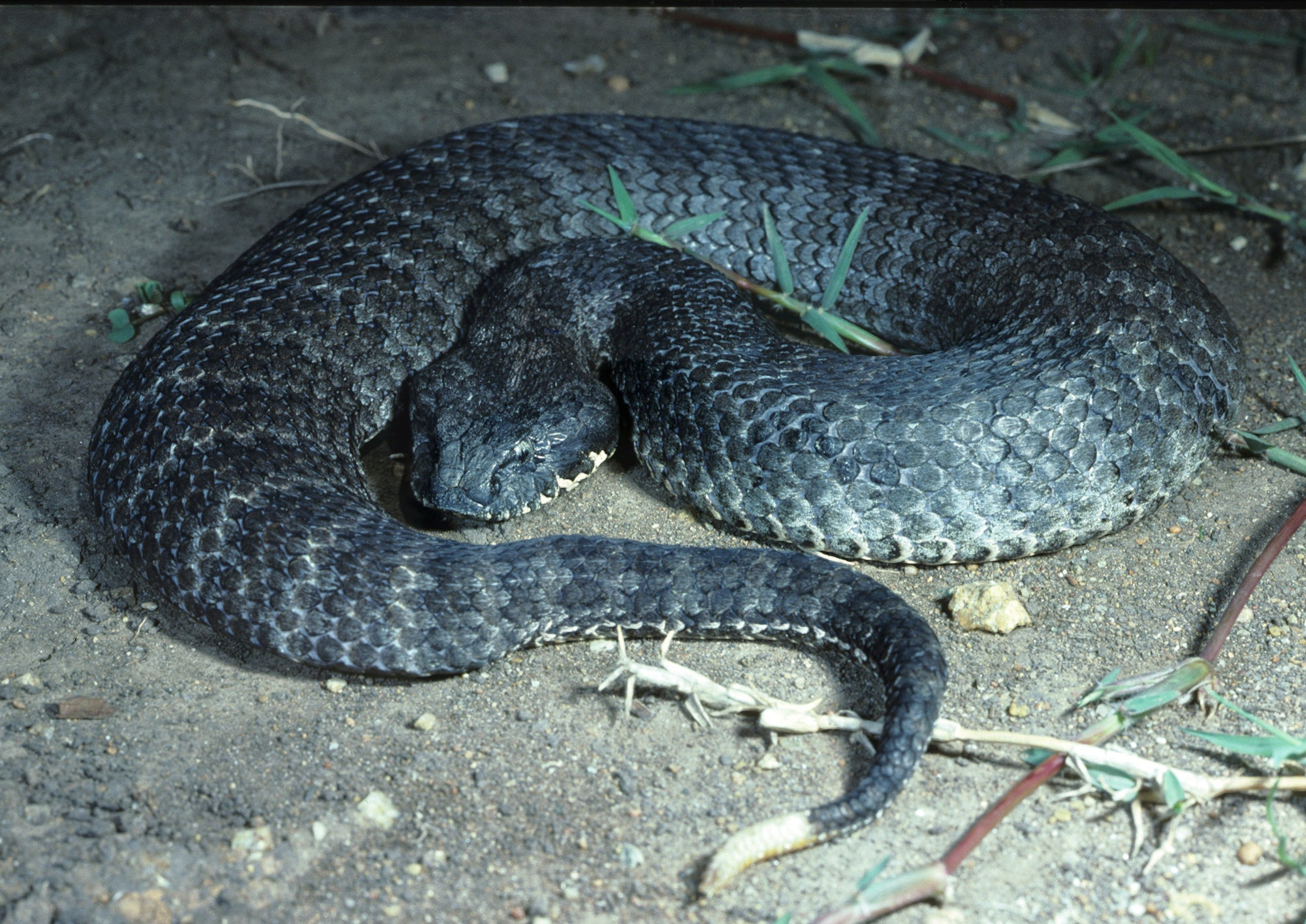 Top 10 Venomous Snakes to Look Out for on a Hunting Trip