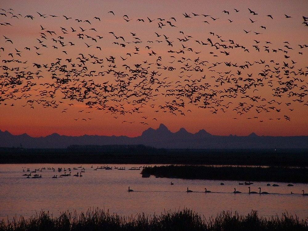 Camas National Wildlife Refuge