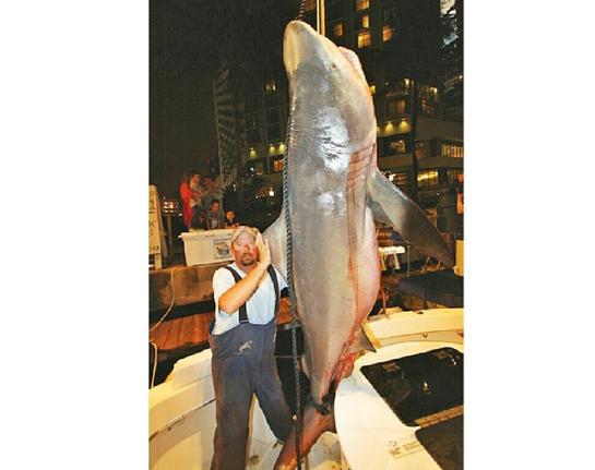 Photo: Massive Bull Shark Caught Off Miami Beach