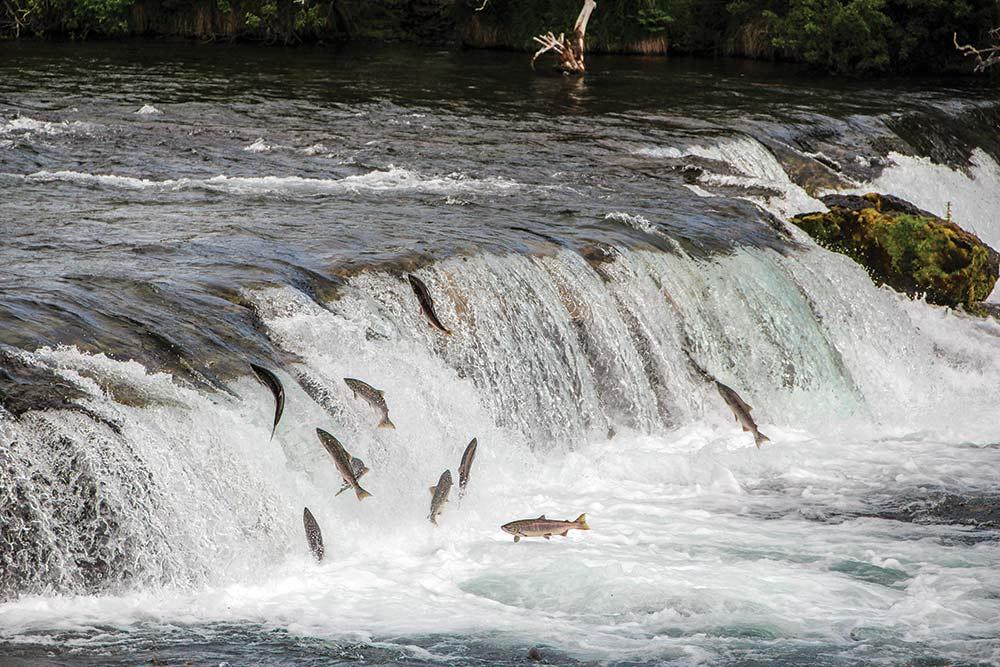 salmon jumping brooks falls