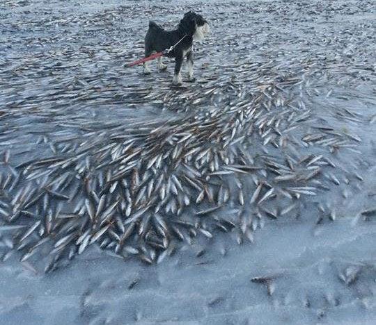Flash-Frozen Fish
