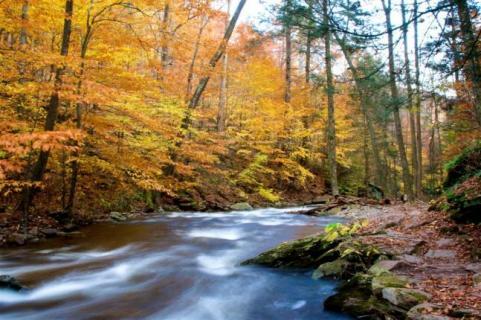httpswww.outdoorlife.comsitesoutdoorlife.comfilesimport2014importImage2009photo7Decfoliage_15.jpg