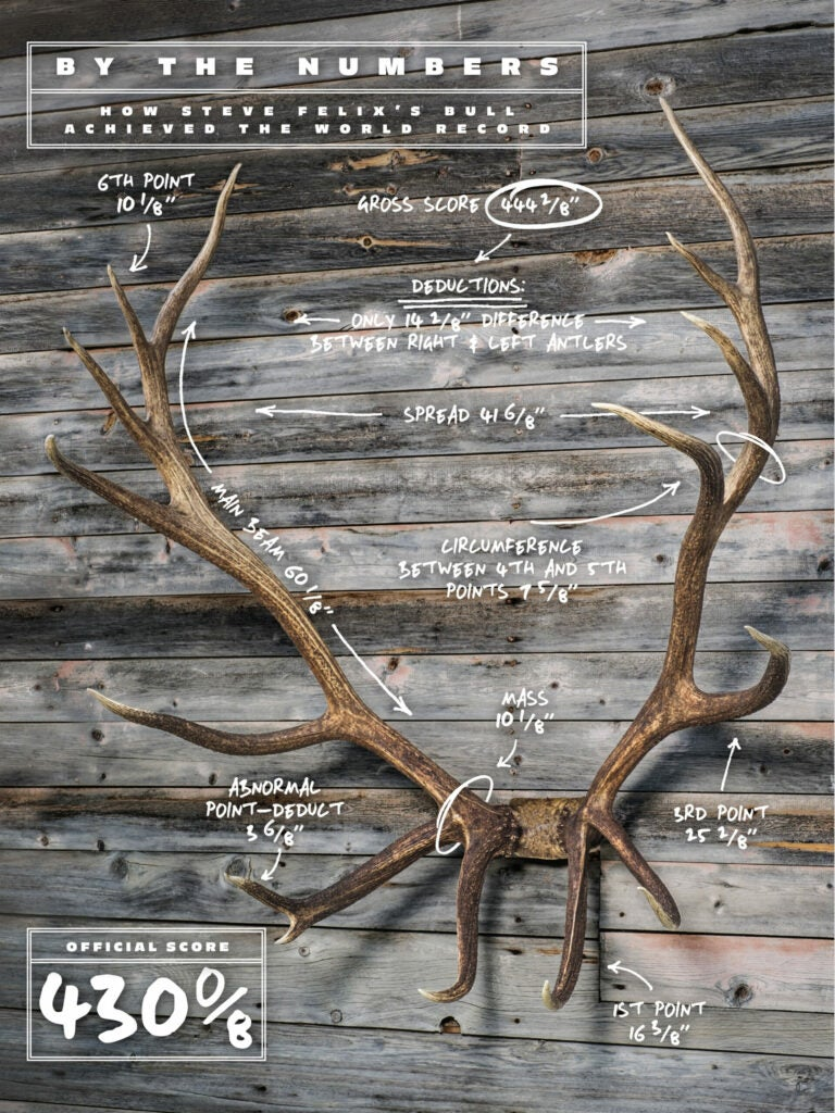 annotated antlers scoring the felix bull
