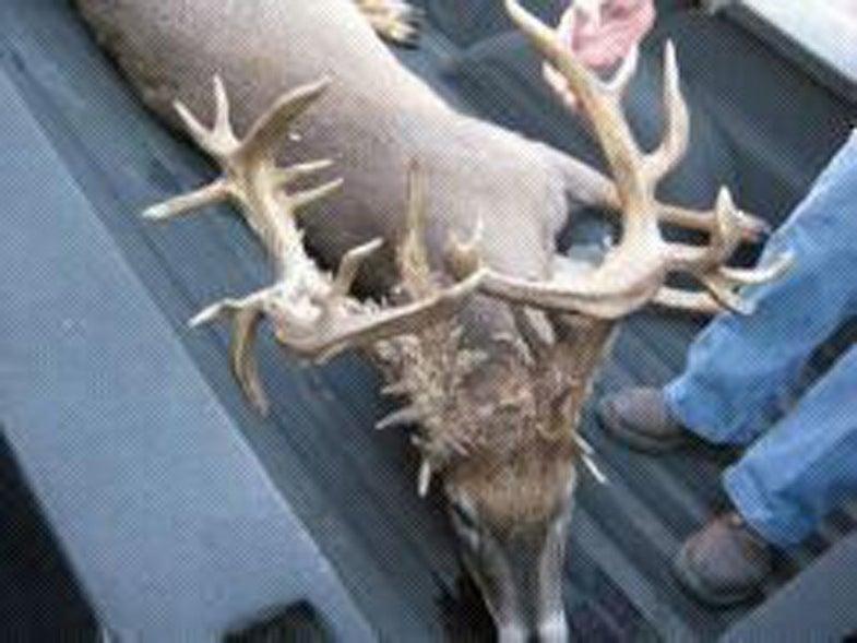 Crazy Kansas Buck