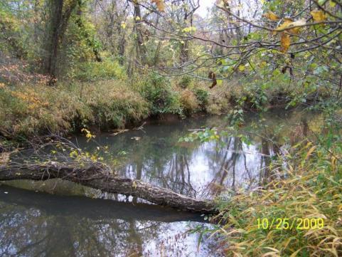 httpswww.outdoorlife.comsitesoutdoorlife.comfilesimport2014importImage2009photo7Decfoliage_41.jpg
