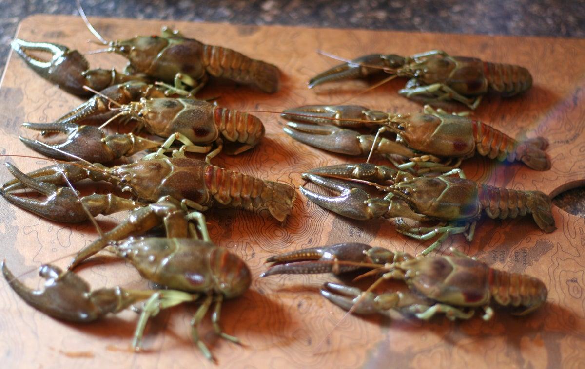 freshwater crayfish boil