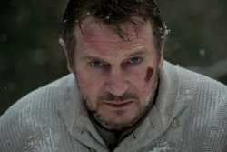 Liam Neeson Eats a Wolf For New Movie, The Grey