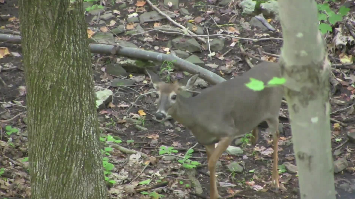 Hunting Video: Doe Hunt on Opening Day Connecticut Archery Season