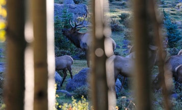 10 Things Elk Hunters Shouldn't Leave Home Without