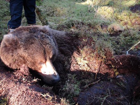 Stories From Alaska: Almost Ambushed By a Brown Bear