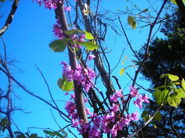httpswww.outdoorlife.comsitesoutdoorlife.comfilesimport2013images20110416_009_0.jpg