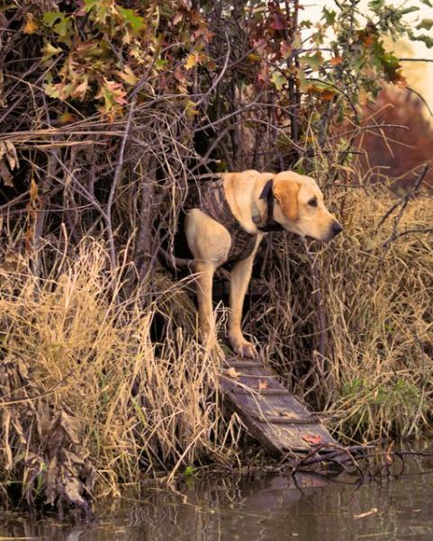 httpswww.outdoorlife.comsitesoutdoorlife.comfilesimport2014importImage2010photo718_0.jpg