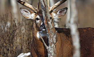 Outdoor Life's No-Excuses Guide To Hunting The Rut