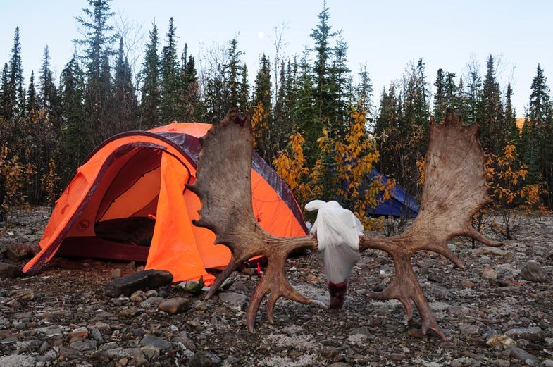 Hunting campsite and trophy moose antlers