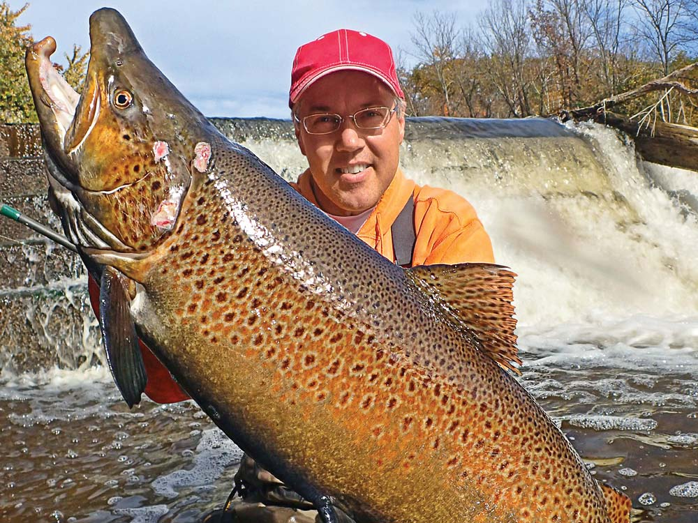 Battle Scarred Wisconsin Brown Trout