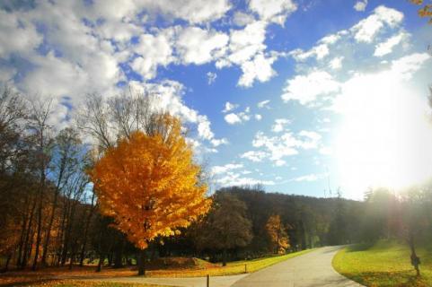 httpswww.outdoorlife.comsitesoutdoorlife.comfilesimport2014importImage2009photo7Decfoliage_11.jpg