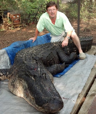Florida Trapper Catches Monster, 14-Foot Alligator in a Residential Lake