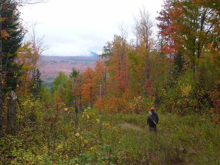 httpswww.outdoorlife.comsitesoutdoorlife.comfilesimport2014importImage2009photo7Moose3.JPG