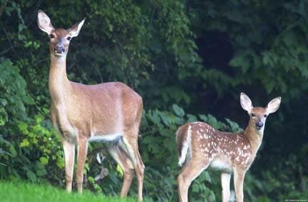 httpswww.outdoorlife.comsitesoutdoorlife.comfilesimport2013images201008EAST_0.jpg