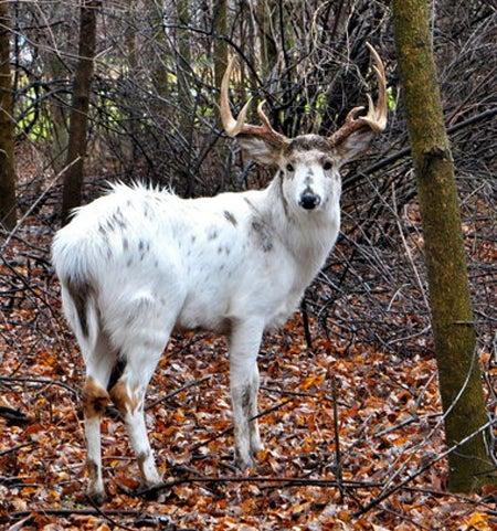 httpswww.outdoorlife.comsitesoutdoorlife.comfilesimport2013images201210Piebald_15.jpg
