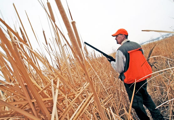 Upland Bird Hunting Tips: How to Find More Birds in November