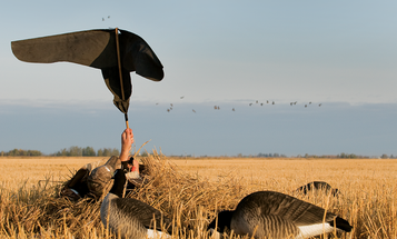 The Do's and Don't of Flagging Geese Into Your Spread