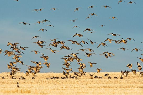 Five Most Underrated Places to Hunt Waterfowl