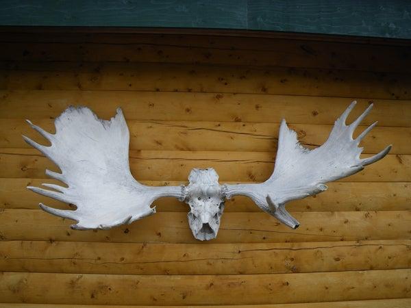 httpswww.outdoorlife.comsitesoutdoorlife.comfilesimport2013images20101024_Yukon3X_0.jpg