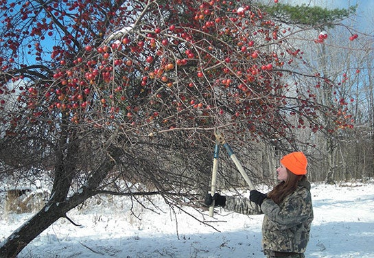 Winter Work for Whitetails