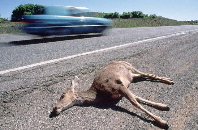 Roadkill Permits? Gimme a Break!