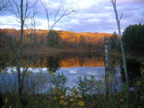 httpswww.outdoorlife.comsitesoutdoorlife.comfilesimport2014importImage2009photo7Decfoliage_33.jpeg