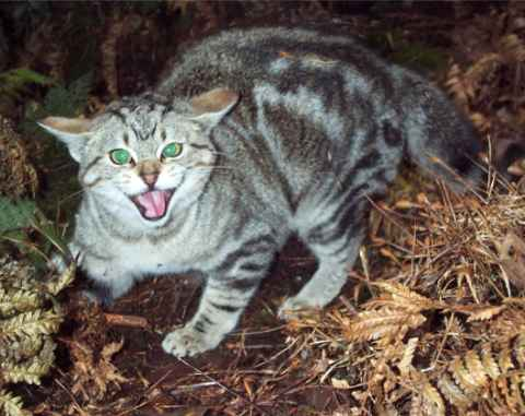 Feral Cats Attack