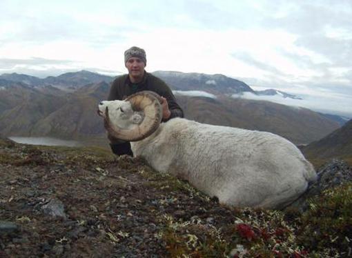 Hunting Tactics for Dall Sheep
