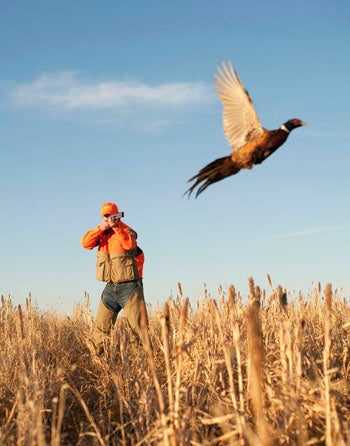 How to Hunt Pheasants Solo