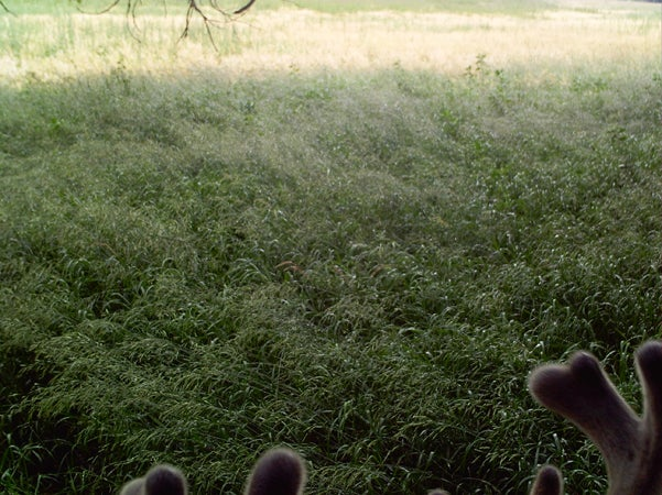 httpswww.outdoorlife.comsitesoutdoorlife.comfilesimport2013images201007RQ22_0.jpg