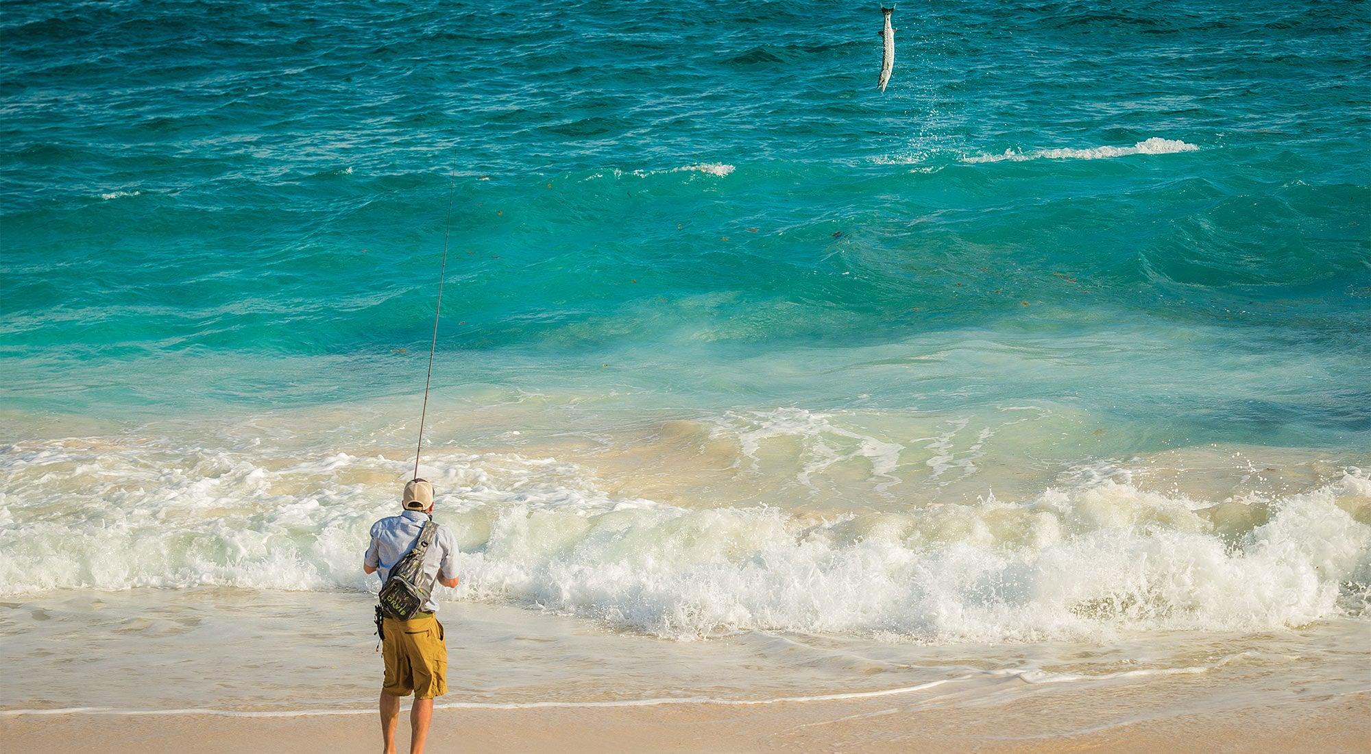 barracuda fishing punta pajaros flats
