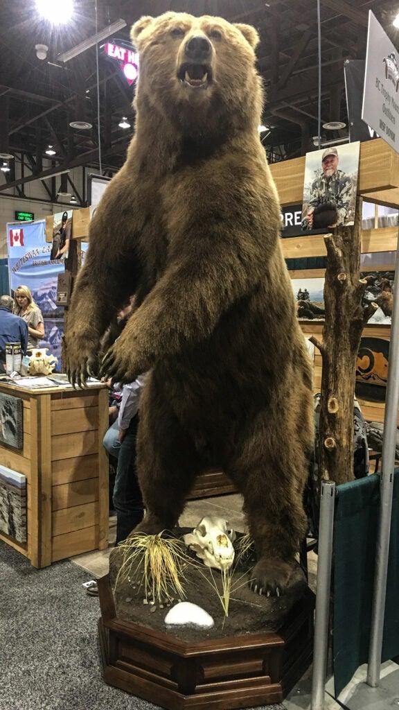 standing brown bear mount