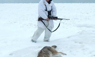 Photos: Coyote Hunting on Lake Superior